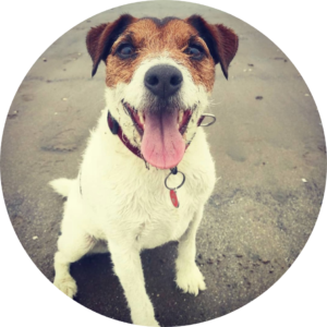 Pepper - Marketing Support and Staff Well-being Consultant at Big House Events